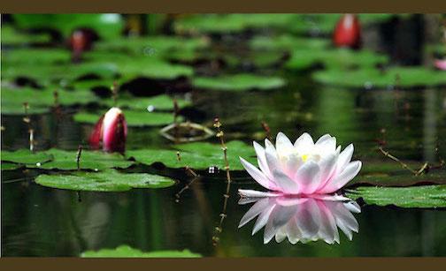 Pond and Lake Management   Greenville, SC   Spartanburg, SC   Columbia, SC   Charleston, SC