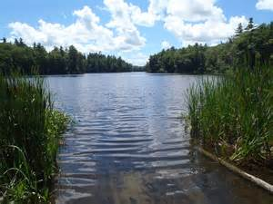 Welcome to Aquatic management Services new website and Blog!